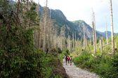 Góry tatry w polsce - dolina roztoka — Zdjęcie stockowe