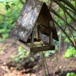 Bird nesting-box in the tree — Stock Photo #19543935
