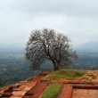 Постер, плакат: Picturesque view from the upper palace Sigiriya Sri Lanka