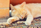 Sleeping red cat — Stok fotoğraf