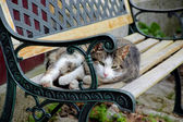 Lazy cat is lying on the bench — Stock Photo
