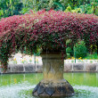 Beautiful fountain inl Botanical Garden, Kandy, Sri Lanka — Stock Photo