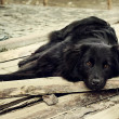 Sad black dog is laying on outdoors — Stock Photo