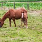 Horse — Stock Photo #30078045