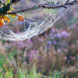 Cobweb, Spider web — Stock Photo #31942847