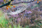 Cobweb, Spider web — Stock Photo