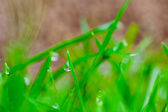 Grass water drop — Stock Photo