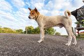 Streetdog — Stock Photo