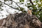 Gato está olhando — Foto Stock