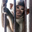 Monkeys of Thailand — Stock Photo