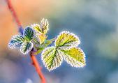 замороженные лист — Стоковое фото