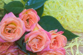 Three roses close-up on a bright background — Stock Photo