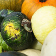 Squash Harvest III — Stock Photo