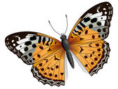 Vector some orange butterfly. — Stock Vector