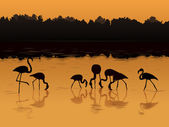 Vector flamingos at sunset in the river. — Vector de stock