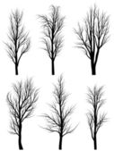 Silhouettes of birch trees without leaves. — Stock Vector