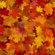 Autumn maple leaves, seamless background. — Imagen vectorial