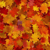 Autumn maple leaves, seamless background. — Stock Vector