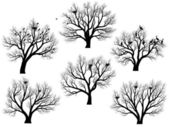 Silhouettes of birds nest in trees without leaves. — Stock Vector