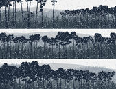 Horisontella fanor av vintern barrträd pinewood. — Stockvektor