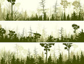 Horizontal banners of coniferous wood. — Stock Vector