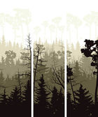 Vertical banners of coniferous wood. — Stock Vector
