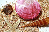 Sea shells and sands — Stock Photo