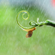 Snail creeping up on branch — Stock Photo #21255373