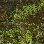 Piece of moss wall — Stock Photo #21271181