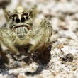 Jumping spider — Stock Photo #21700975