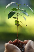 Save the earth, replanting forest, isolated green background — Stock Photo