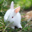 Rabbit at lawns — Stock Photo #22366979