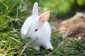 Rabbit at lawns — Stock Photo