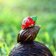 Cockle and snail — Stock Photo