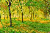 Dásně stromy — Stock fotografie