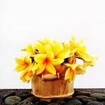Flowers — Stock Photo #35162865