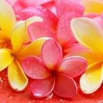 Bali flower — Stock Photo