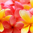 Stock Photo: Bali flower