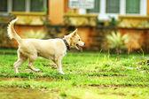 Dog at play — Stockfoto