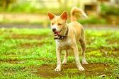 Dog at play — Stock Photo
