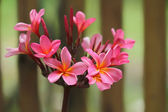 Tropical flowers — Stock Photo