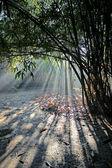 луч света — Стоковое фото