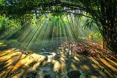 ışık hüzmesi — Stok fotoğraf