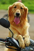 Cães — Foto Stock