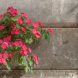Flower and brick - 