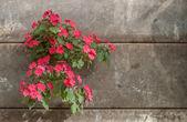 Flower and brick — Stock Photo