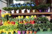 Flowers shop — Stock Photo