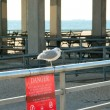 Seagull seating on the barrier — Stock Photo