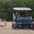 Stock Photo: Safari in Namibia, Africa
