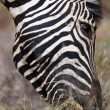 Stockfoto: Zebra, safari, Namibia